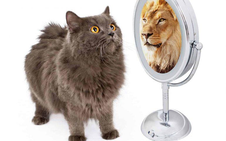 macska tükör oroszlán